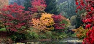 foliage3_thumb2